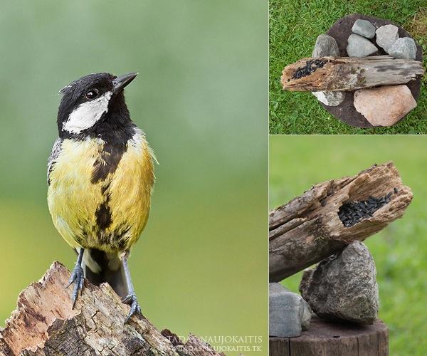 3-birdphotography.jpg