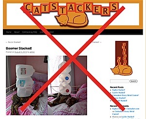 catstackers.jpg
