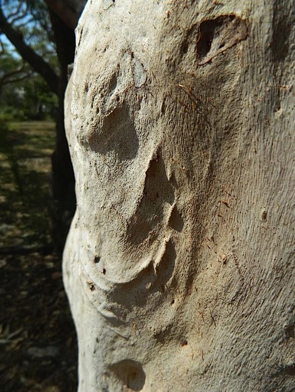 Tree trunk 2.jpg