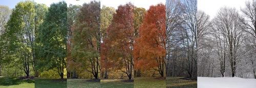 4-TreeSeasons.jpg