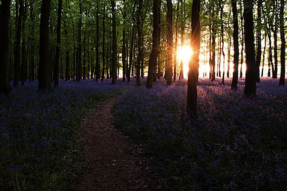 bluebellSunset.jpeg
