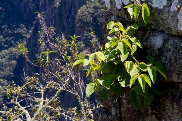 PeterWestCarey-Peru2011-1128-1663