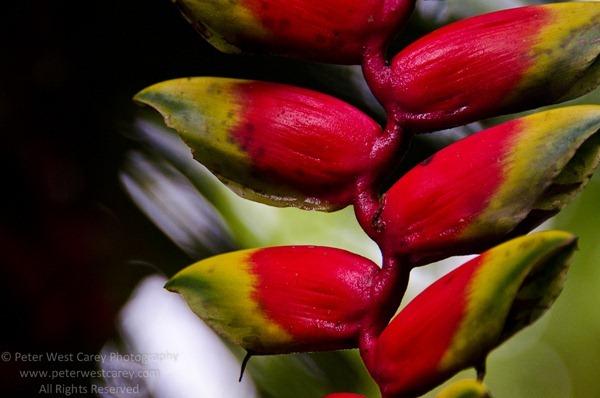 PeterWestCarey-Peru2011-1201-2673